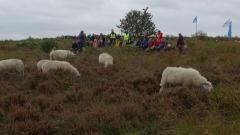 11. schapen